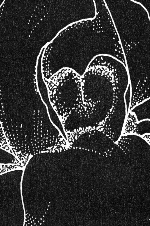 eco_013: Jeans Beast / Das Gaslight Ghoul – split