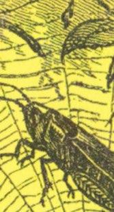 Salt (Detail 3)
